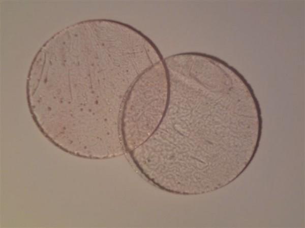 Kreis, rosa, 5,5cm